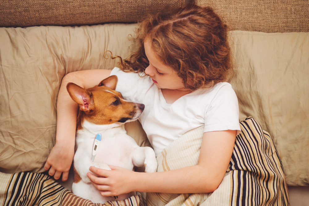 what is bad for a dog kidneys