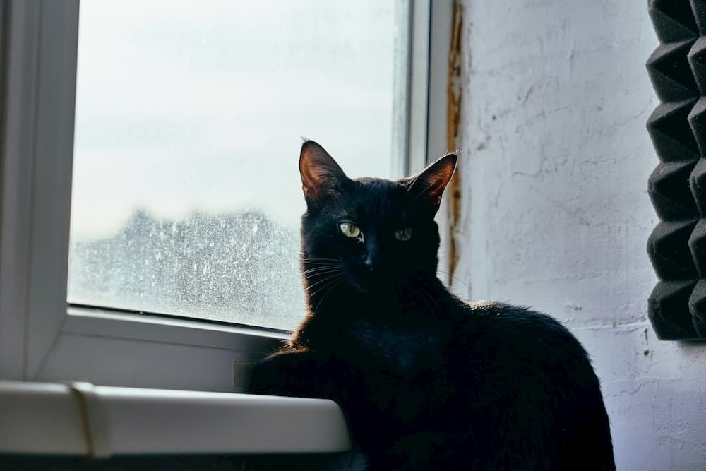 what is the best cat window perch