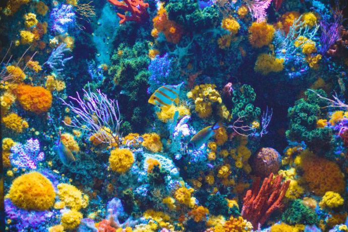 Best Freshwater Aquarium Fish Combination