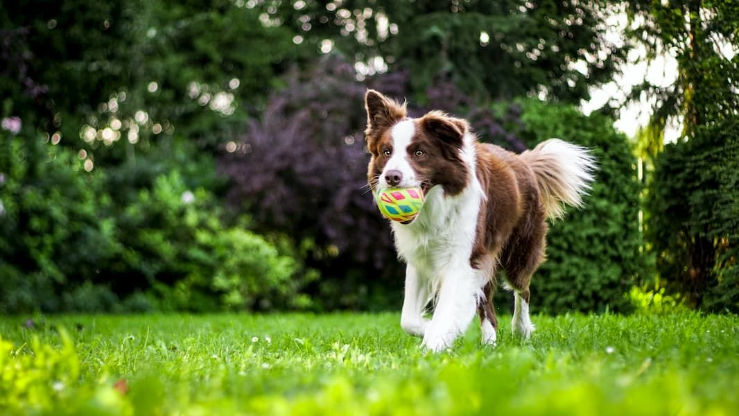 what is the best gps tracker for my dog