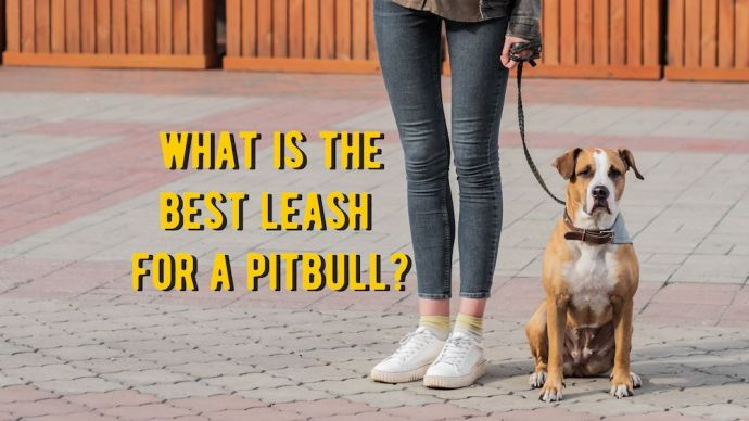 what is the best leash for a pitbull