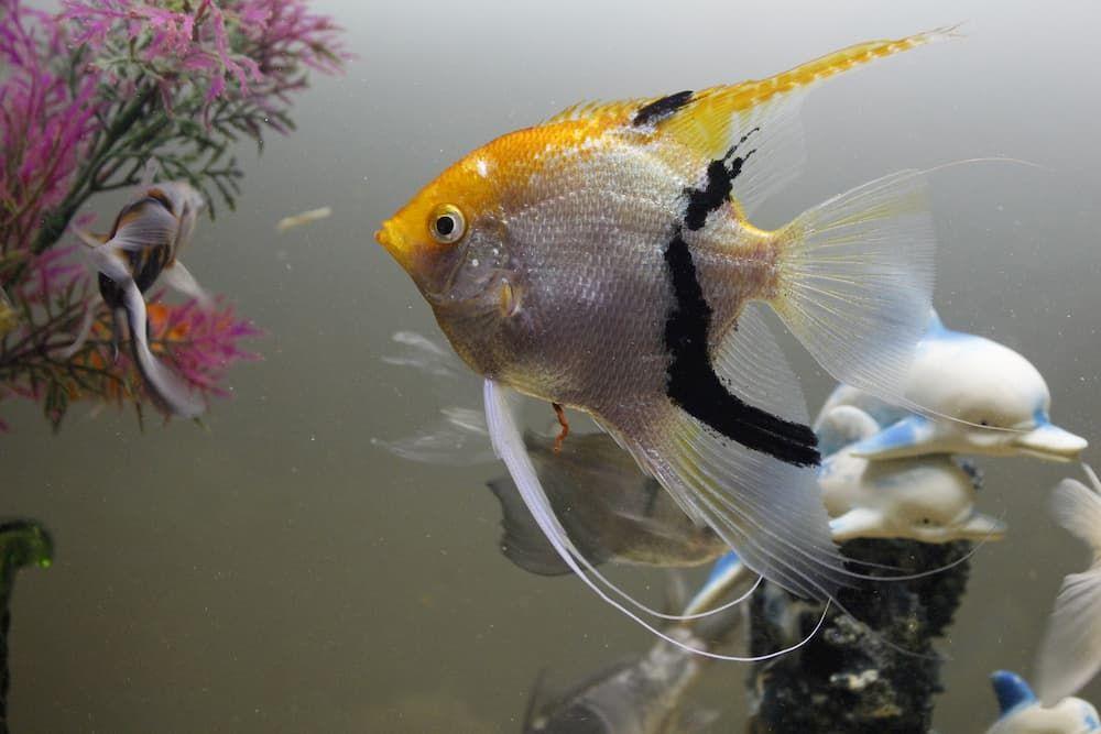what is the perfect temperature for tropical aquarium fish