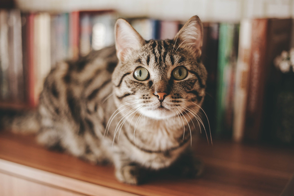 what medical conditions can affect older cats