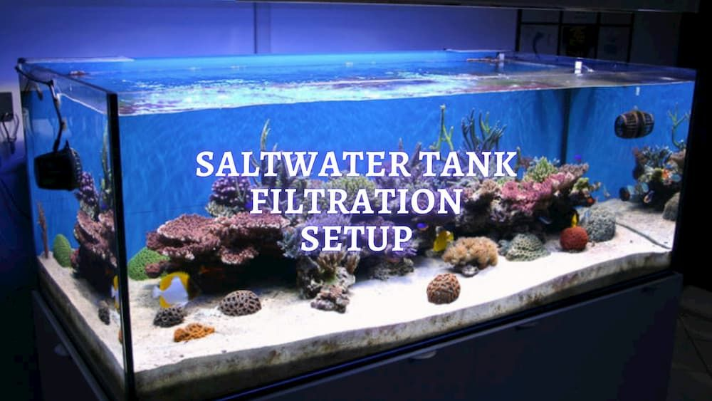 what saltwater aquarium filter system do you need
