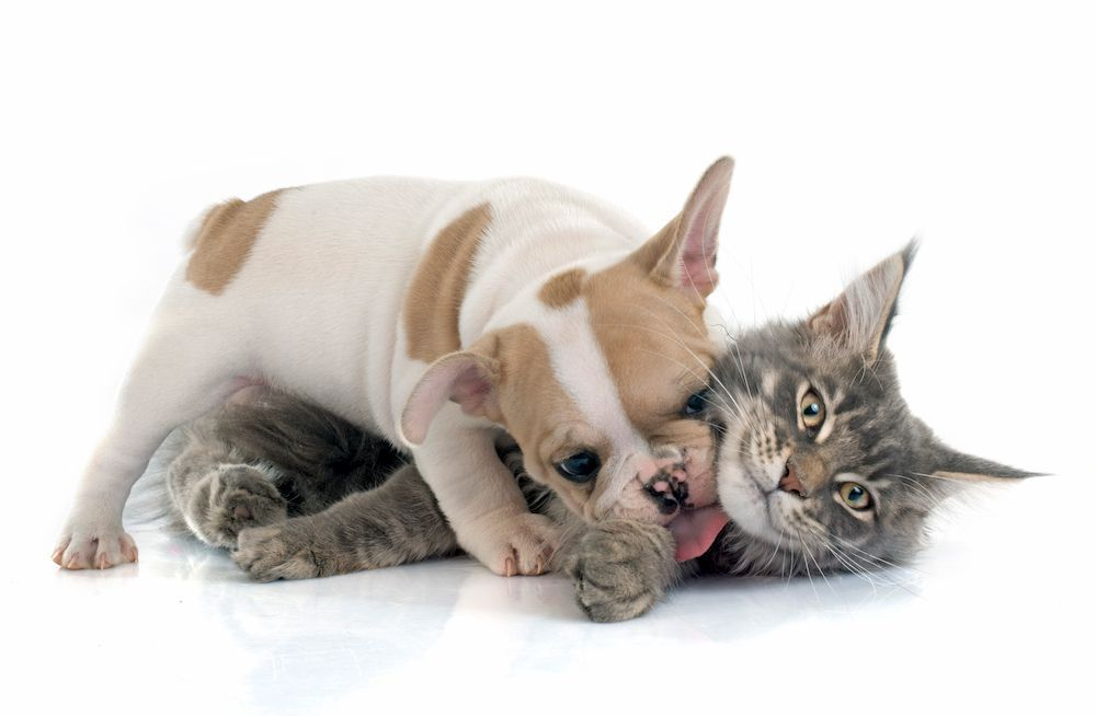 what should i do if cat and dog dont get along