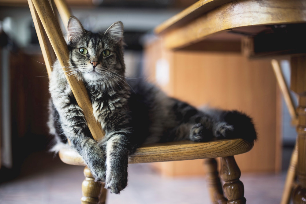 what to do, when your cat is getting old