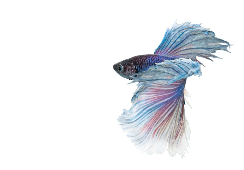 what to put in a betta fish tank
