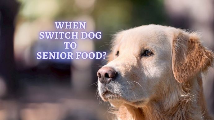 when switch dog to a senior dog food