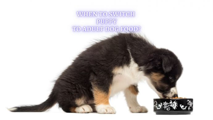 when to switch puppy to adult dog food