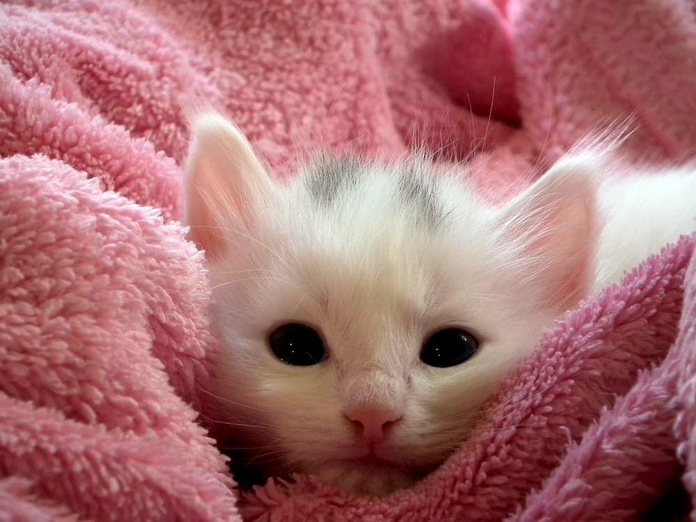 when to wean kitten