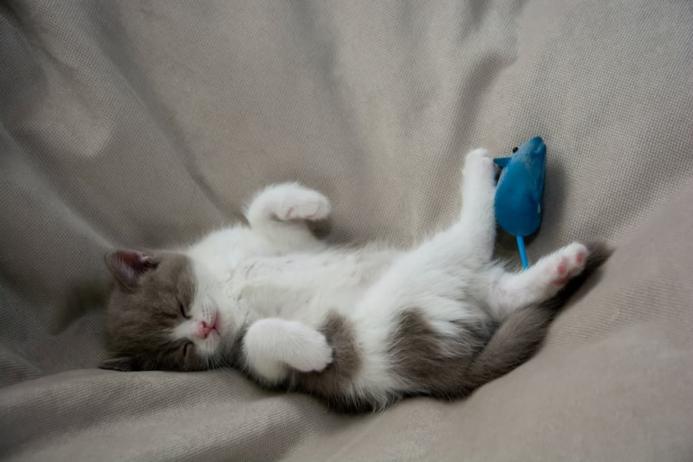 when to wean kittens