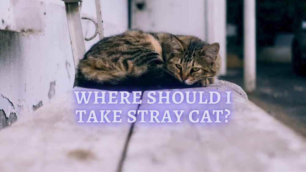 where should i take stray cat