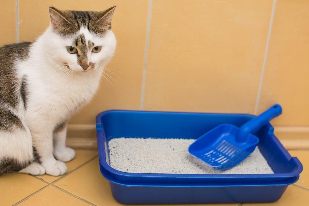 where to put cat litter box