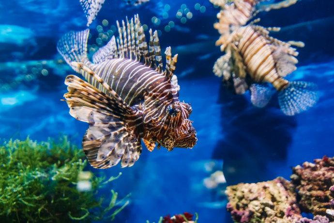 Why can't Saltwater Fish live in Freshwater?