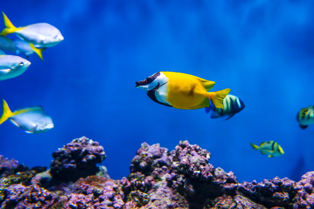 why do aquariums need water changes